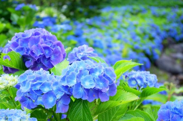 羨ましすぎる!栃木県民の日は無料や割引施設がいっぱいです